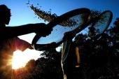 El ser humano perdió un 20% de densidad ósea debido a la agricultura