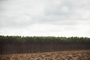 Desiertos Verdes. El neocolonialismo