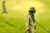 Agrotóxicos e câncer: irresponsabilidade torna-se explícita