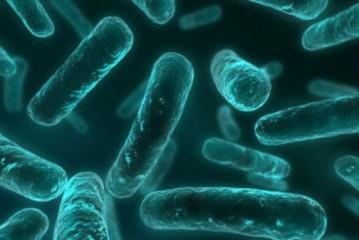 Detectan un gen que podría hacer que una bacteria sea resistente a todos los antibióticos