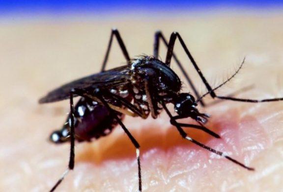 Confirmados dos nuevos casos de dengue en España: un padre y un hijo que residen en Murcia