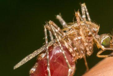 El caos del dengue #4