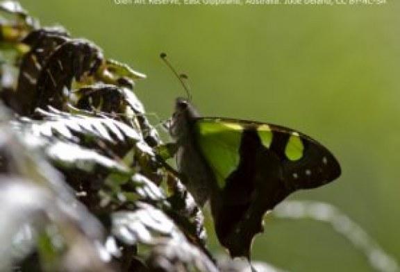 ¿UICN secuestrada por la industria de la biología sintética?